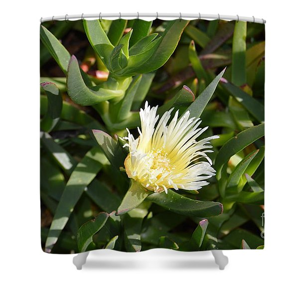 Shower Curtain featuring the photograph Earth Music by Laurie Lundquist