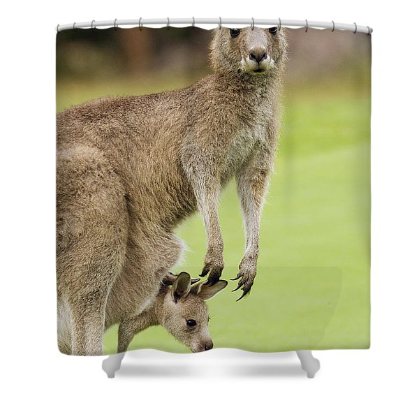 Eastern Grey Kangaroo With Joey Shower Curtain
