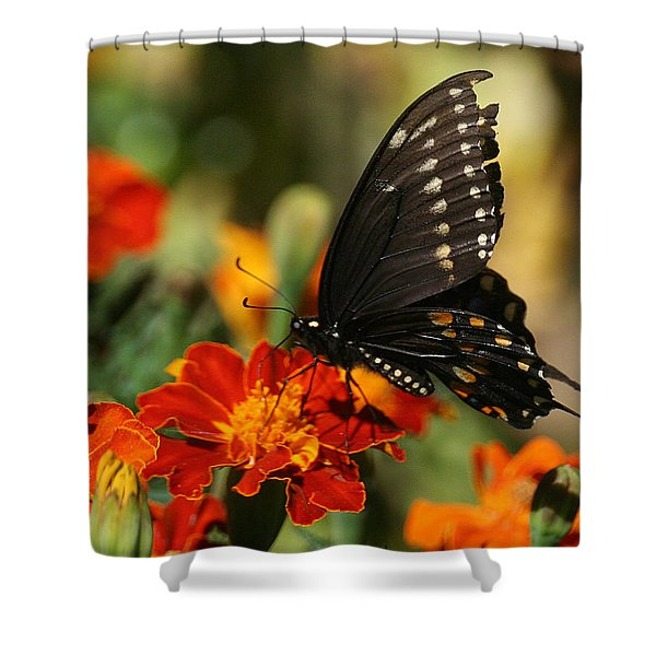Eastern Swallowtail On Marigold Shower Curtain