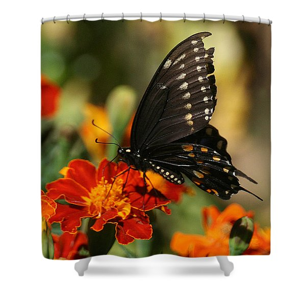 Eastern Swallowtail On Marigold Shower Curtain