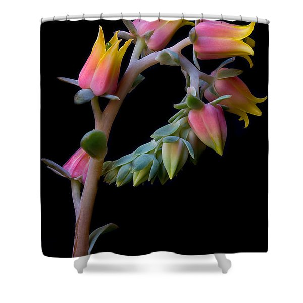 Echeveria Shower Curtain