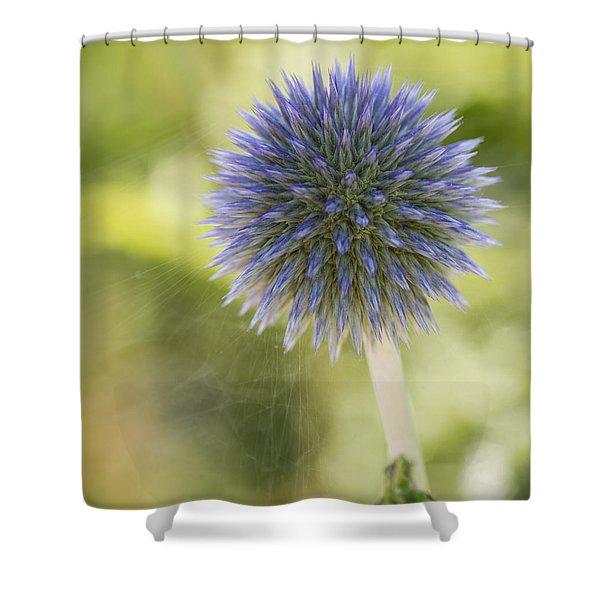 Echinops Blue Shower Curtain