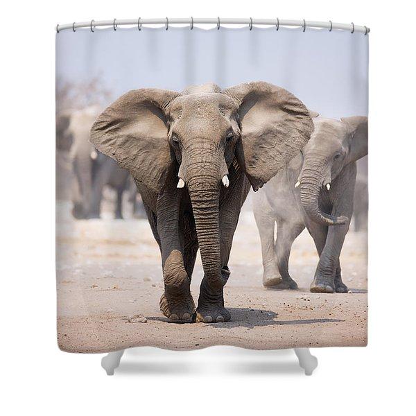 Elephant Bathing Shower Curtain