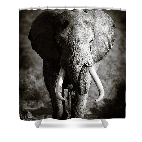 Elephant Bull Shower Curtain
