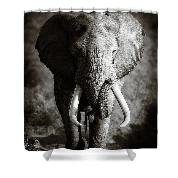 Elephant Bull Shower Curtain