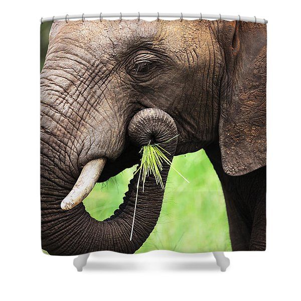 Elephant Eating Close-up Shower Curtain