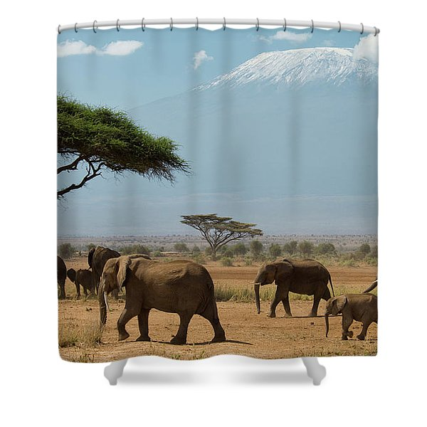 Elephant Herd Walking In Plains Shower Curtain