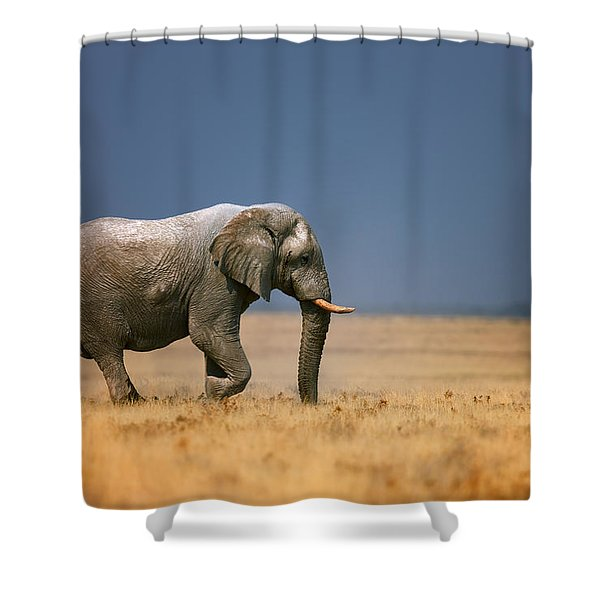 Elephant In Grassfield Shower Curtain