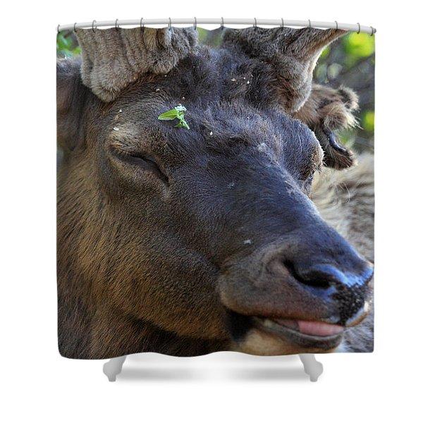 Elk Chuckle Shower Curtain