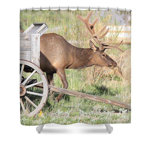 Elk Drawn Carriage Shower Curtain