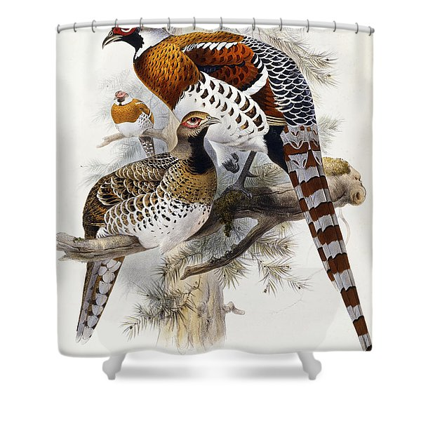 Elliot's Pheasant Shower Curtain