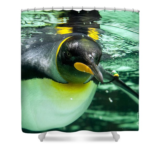King Penguin Shower Curtain