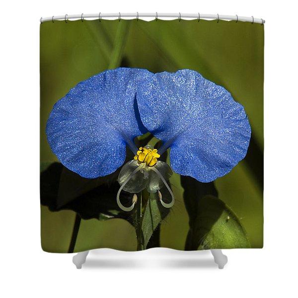 Erect Dayflower  Commelina Erecta Dsmf096 Shower Curtain