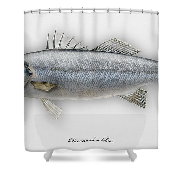 European Seabass Dicentrarchus Labrax - Bar Commun - Loup De Mer - Lubina - Havabor - Seafood Art Shower Curtain