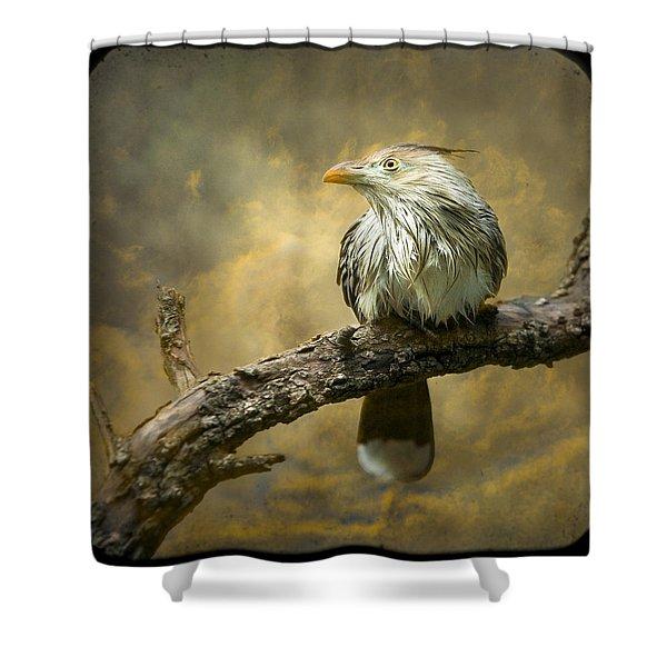Exotic Bird - Guira Cuckoo Bird Shower Curtain