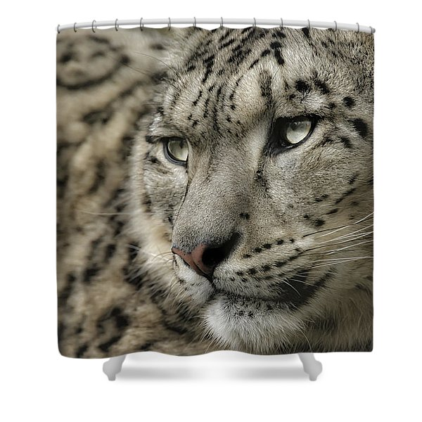 Eyes Of A Snow Leopard Shower Curtain