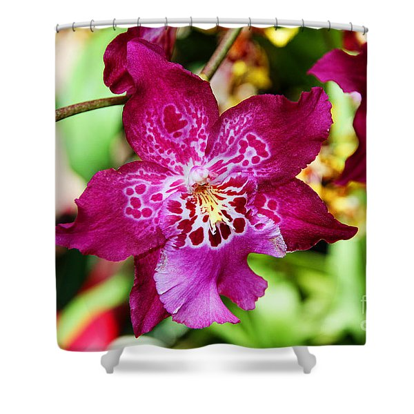 Fabulous Fushia Orchids By Diana Sainz Shower Curtain