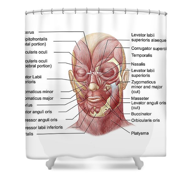Facial Muscles Of The Human Face Shower Curtain