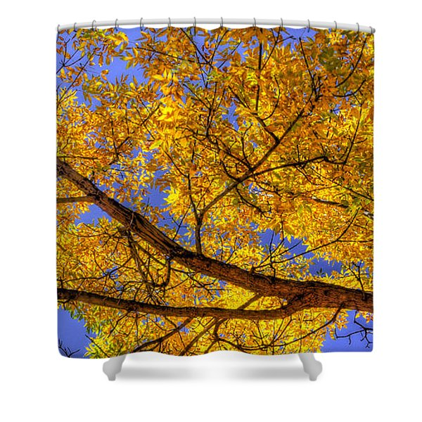 Fall Color Canopy 12161 Shower Curtain