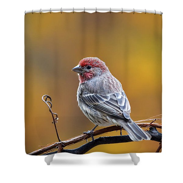 Fall Finch Shower Curtain
