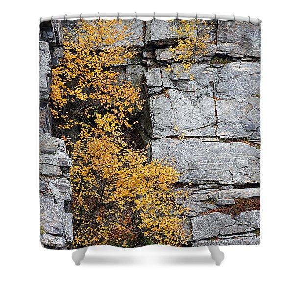 Fall Foliage Colors 01 Shower Curtain