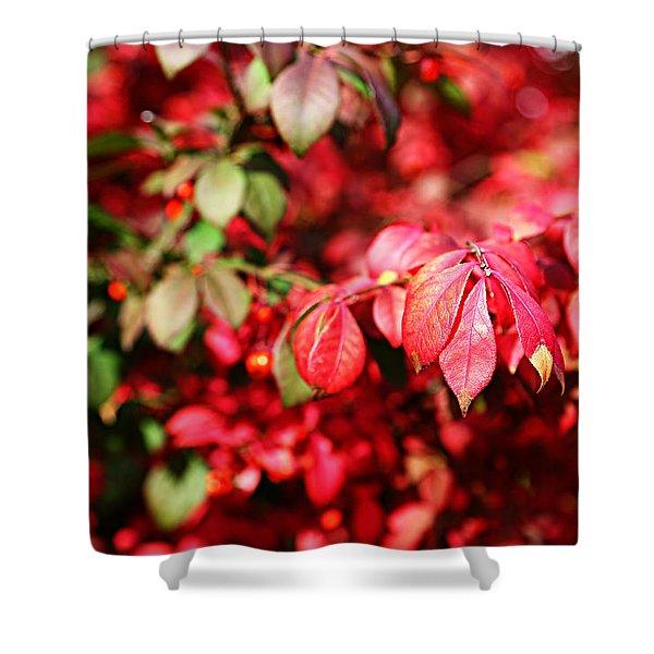Fall Foliage Colors 10 Shower Curtain