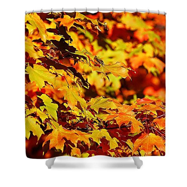 Fall Foliage Colors 13 Shower Curtain