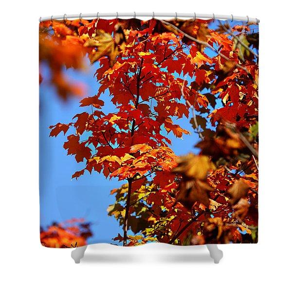 Fall Foliage Colors 15 Shower Curtain