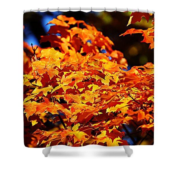 Fall Foliage Colors 16 Shower Curtain