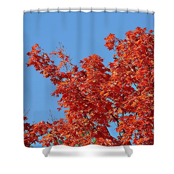 Fall Foliage Colors 20 Shower Curtain