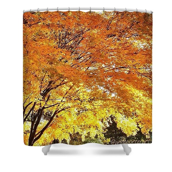 Fall Maple Afternoon Light Shower Curtain
