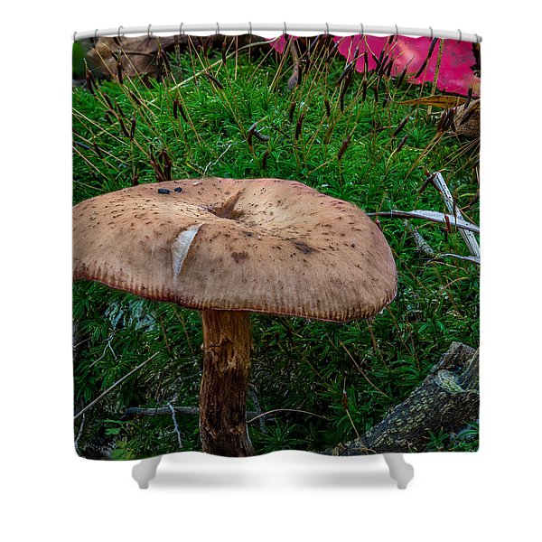 Fall Mushrooms Shower Curtain