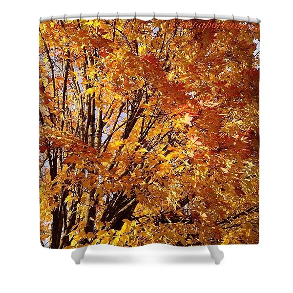 Fall Trees II Shower Curtain
