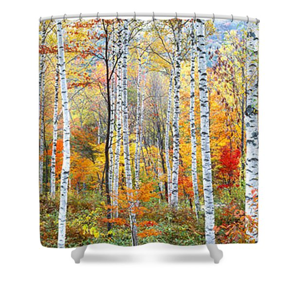 Fall Trees, Shinhodaka, Gifu, Japan Shower Curtain