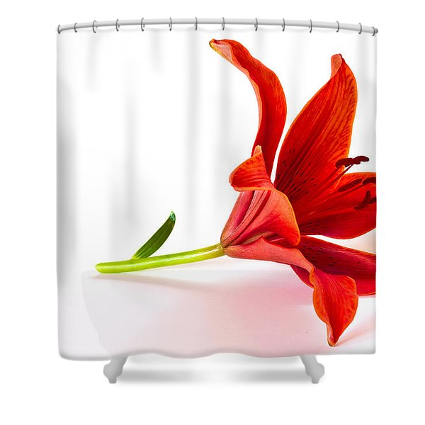 Fallen Tiger Lily Shower Curtain