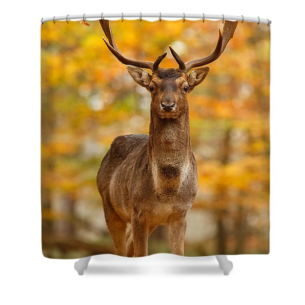 Fallow Deer In Autumn Forest Shower Curtain