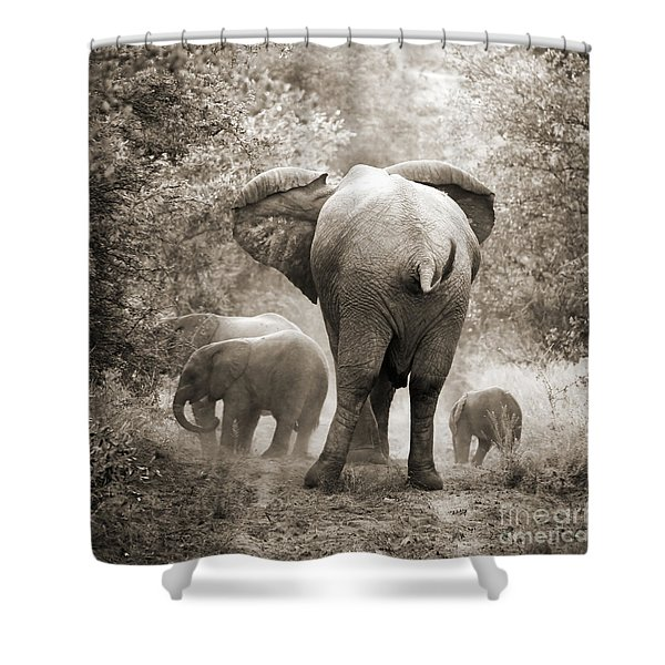 Family Of Elephants Shower Curtain