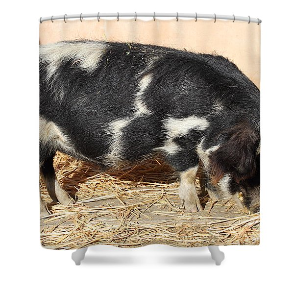Farm Pig 7d27356 Shower Curtain
