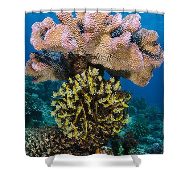 Feather Star Rainbow Reef Fiji Shower Curtain
