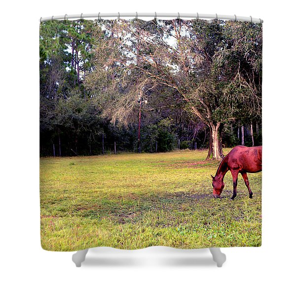 Feeding In The Pasture Shower Curtain
