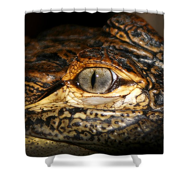 Feisty Gator Shower Curtain