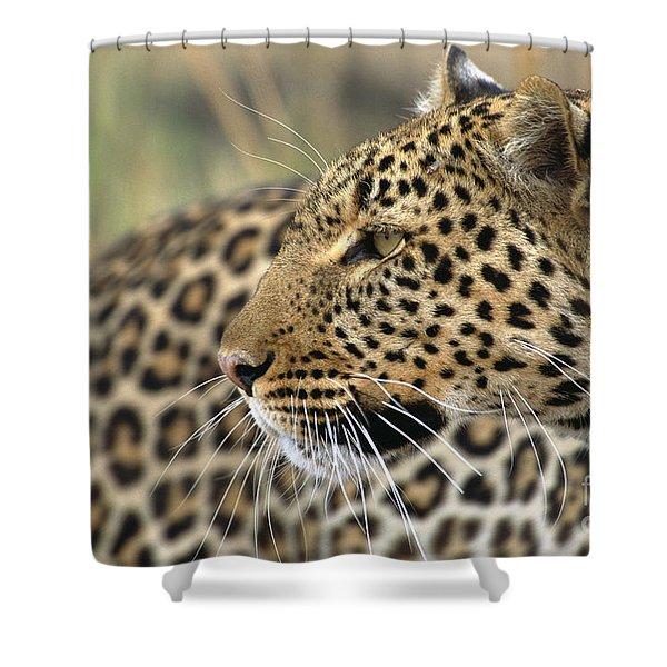 Female Leopard Portrait Masai Mara Shower Curtain