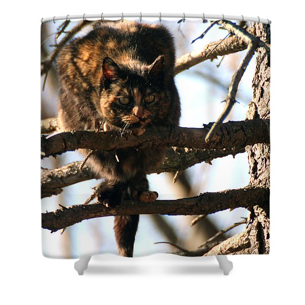 Feral Cat In Pine Tree Shower Curtain