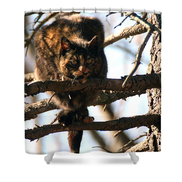 Shower Curtain featuring the photograph Feral Cat In Pine Tree by William Selander