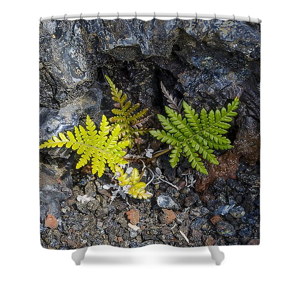Ferns In Volcanic Rock Shower Curtain
