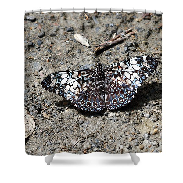 Feronia Cracker Butterfly Shower Curtain