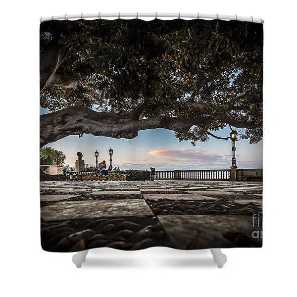 Ficus Magnonioide In The Alameda De Apodaca Cadiz Spain Shower Curtain