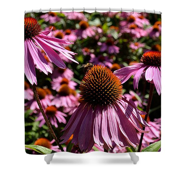 Shower Curtain featuring the photograph Field Of Echinaceas by Scott Lyons