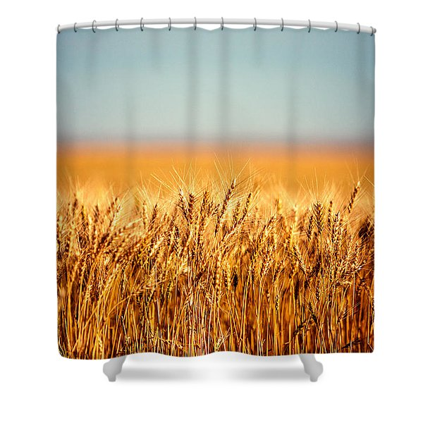 Field Of Wheat Shower Curtain