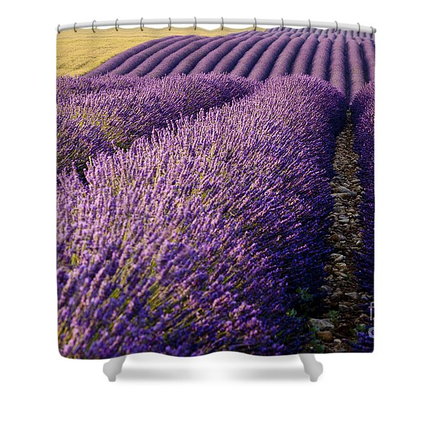 Shower Curtain featuring the photograph Fields Of Lavender by Brian Jannsen